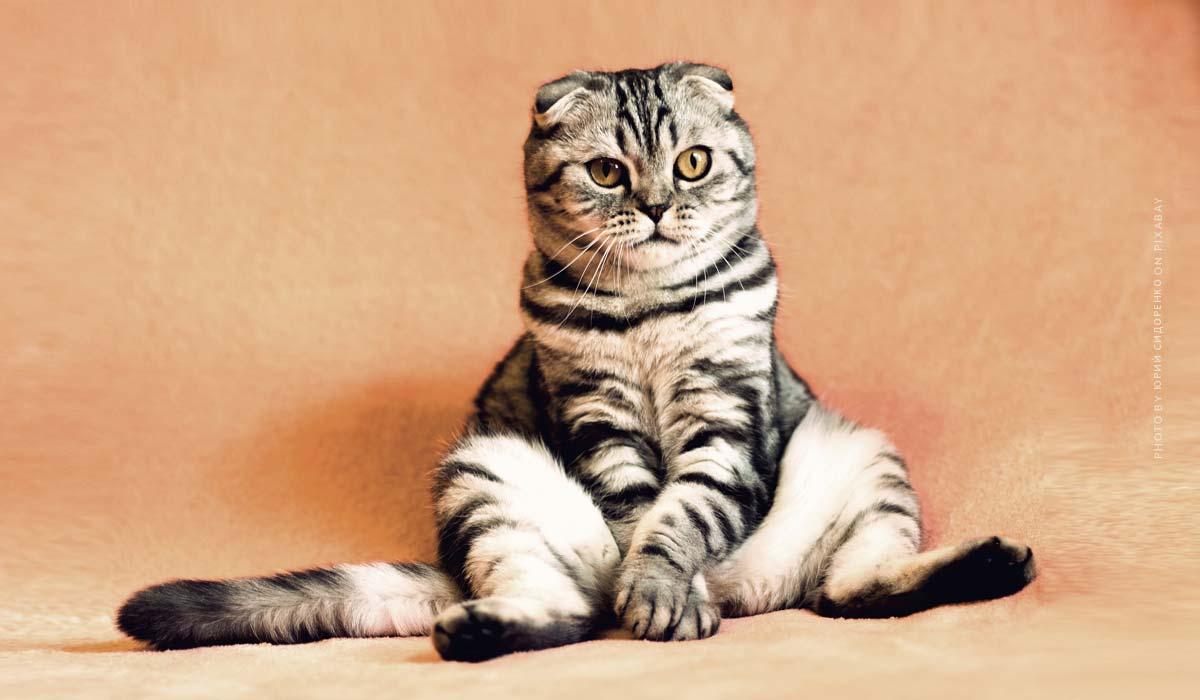 Vacances avec les animaux: Appartement de vacances, camping et mer avec chien, chat et compagnie